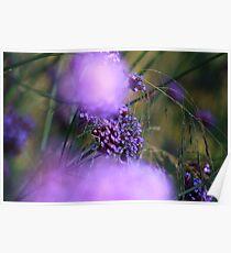 Lilac Bokah Poster