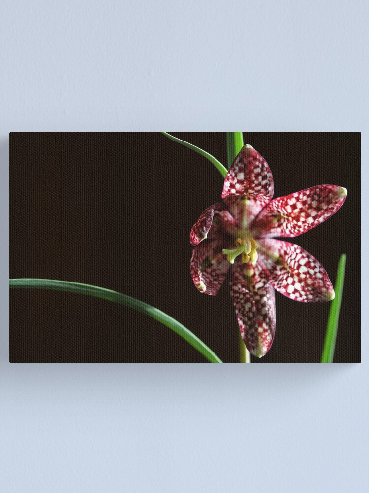 Alternate view of spring star Canvas Print