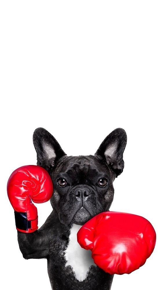 Dog with boxing gloves by Raudel23