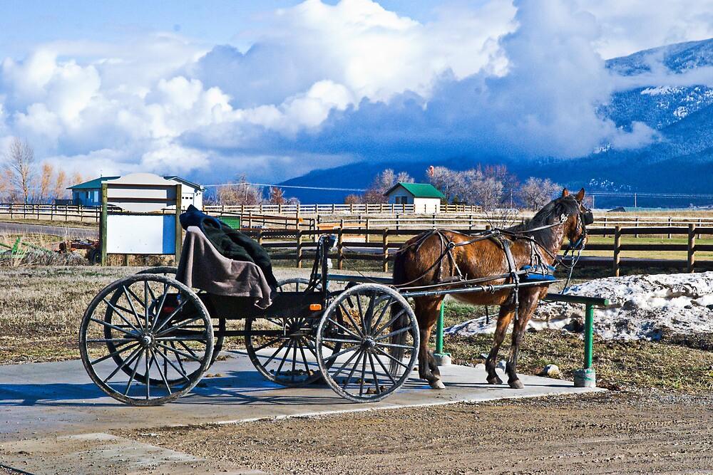 Montana Amish by Bryan Spellman