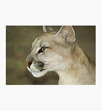 318 puma Photographic Print