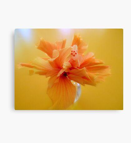 Apricot hibiscus in vase  Canvas Print