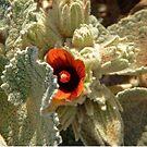 Namibian Flower by Margaret  Hyde