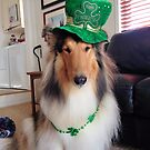 St. Patrick's Collie Dog by Jan  Wall