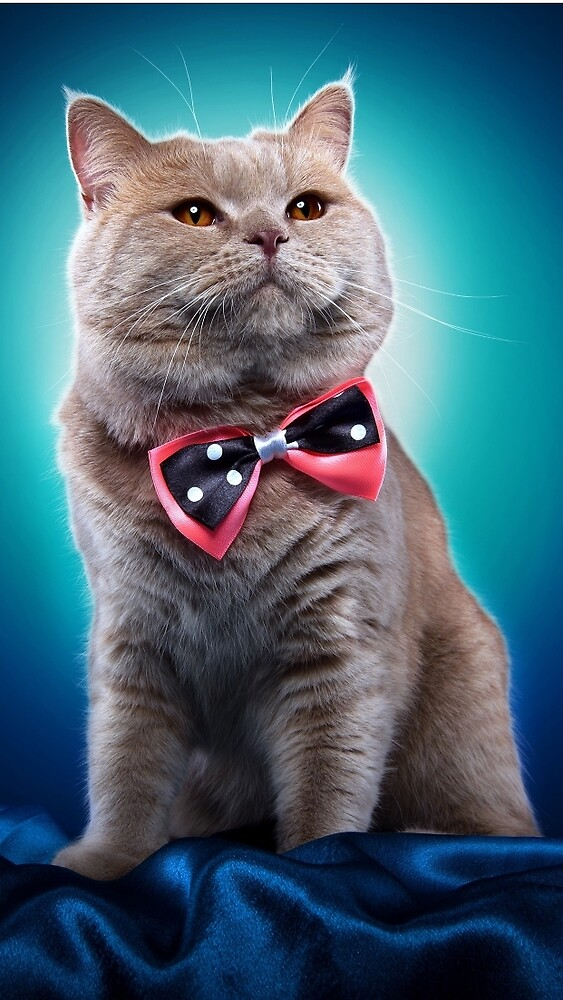 Cat with bow tie by Raudel23