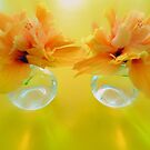 Apricot Hibiscus in Glass  Vases x Two  by Virginia McGowan