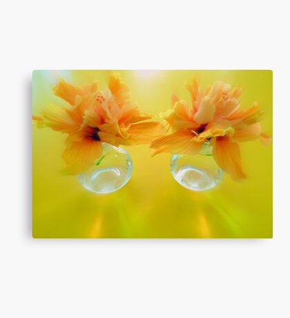 Apricot Hibiscus in Glass  Vases x Two  Canvas Print