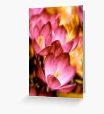 Art Of the Crocus 4 Greeting Card