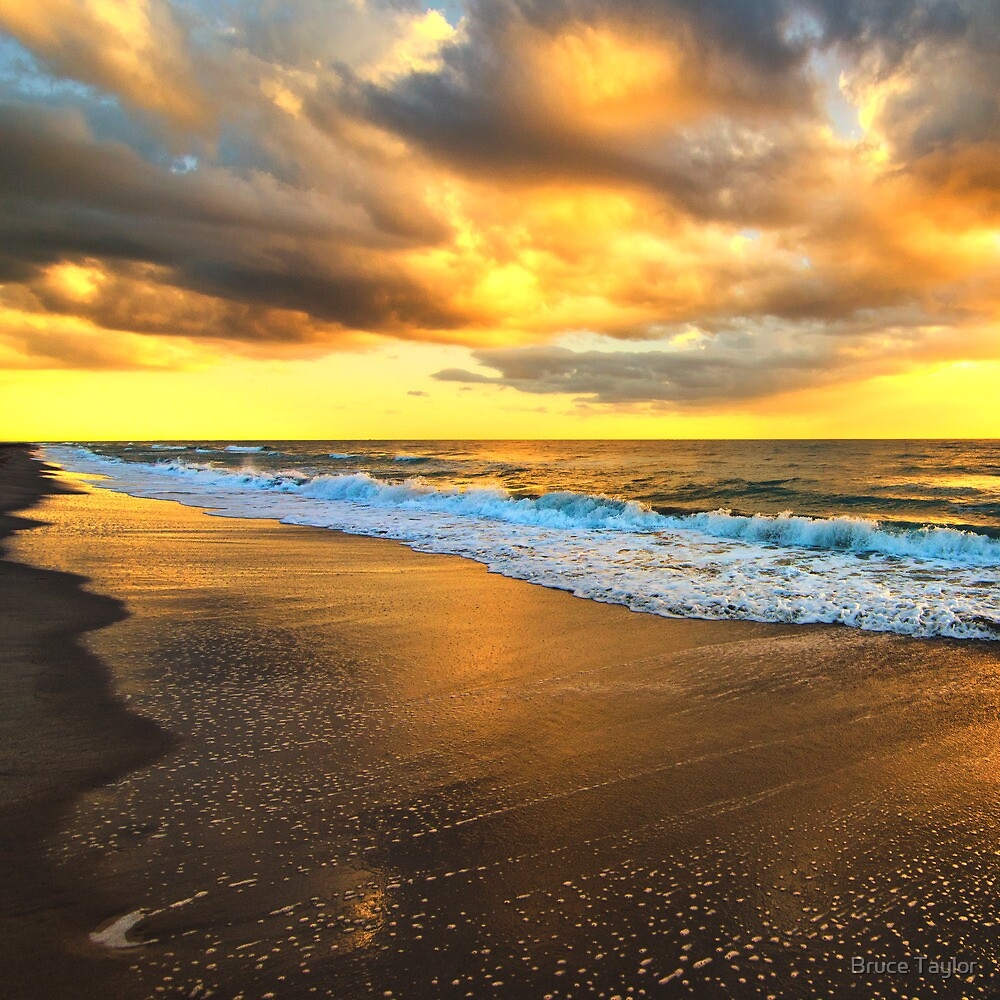 South Florida Morning by Bruce Taylor