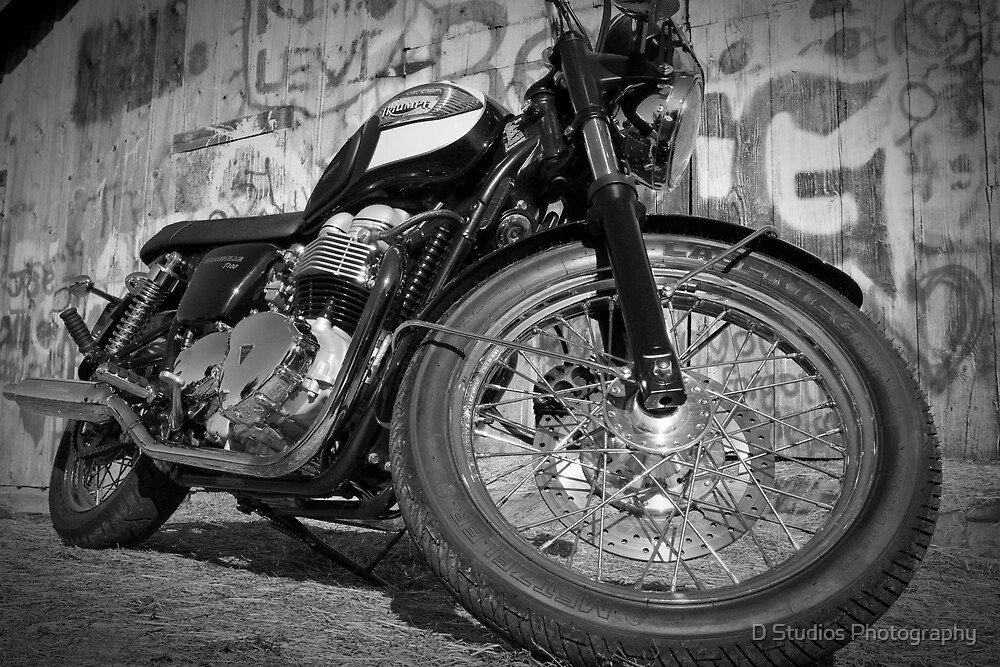 Black and White Triumph by D Studios Photography