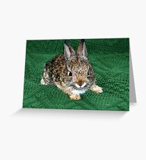 Here Comes Peter Cottontail Greeting Card