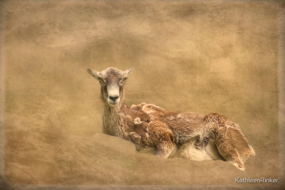 Mouflan by KathleenRinker