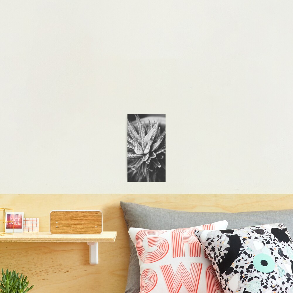 Cactus Species Photographic Print