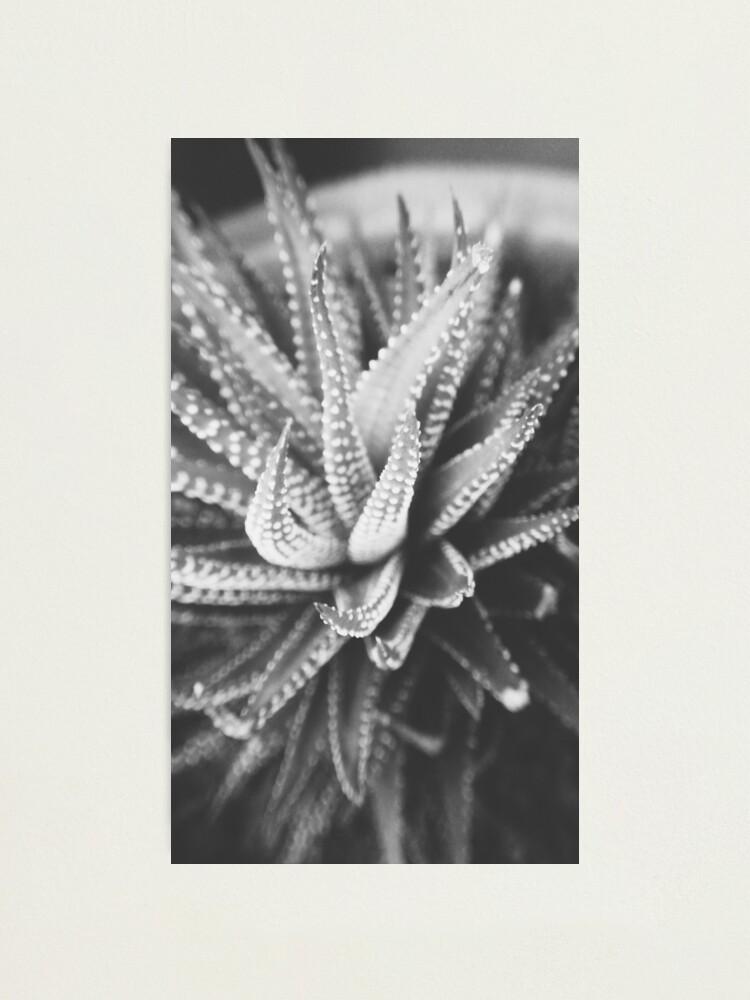 Alternate view of Cactus Species Photographic Print
