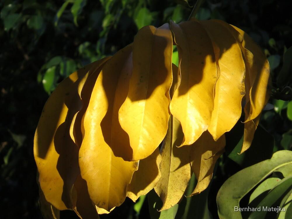springtide's glow II - brillo de la primavera by Bernhard Matejka