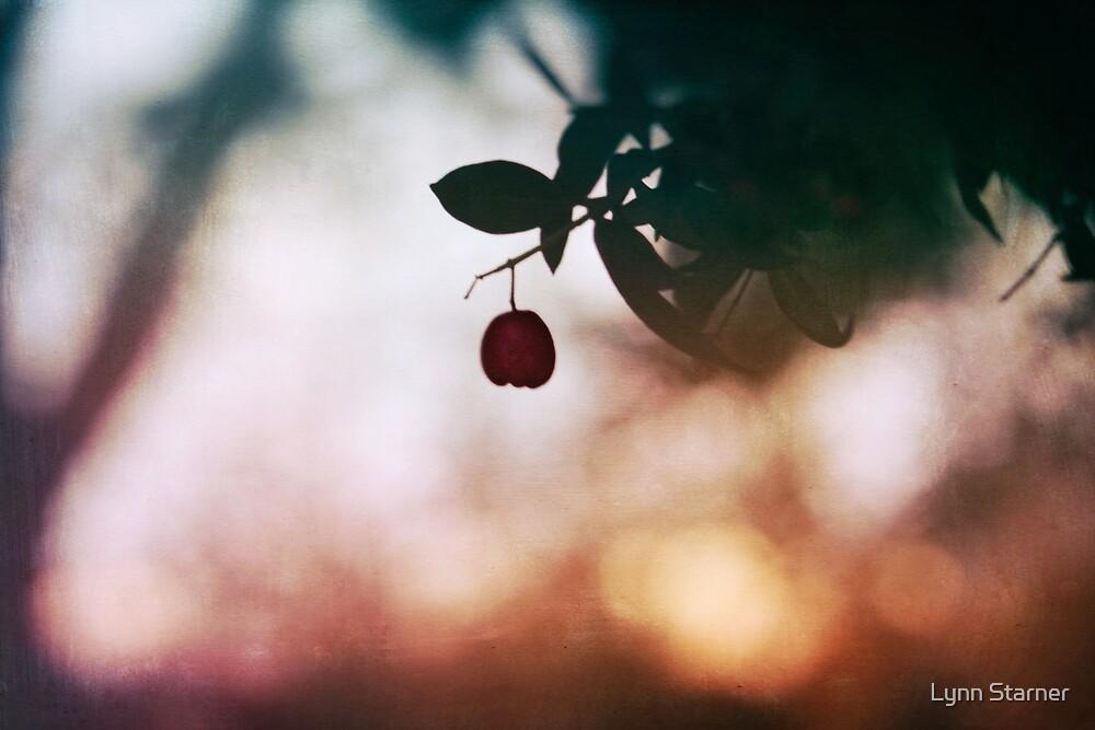 Winter berry by Lynn Starner