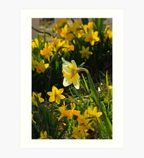 Surrounded By Spring Art Print