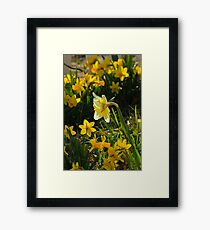 Surrounded By Spring Framed Print