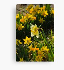 Surrounded By Spring Canvas Print
