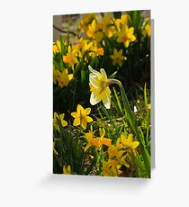 Surrounded By Spring Greeting Card
