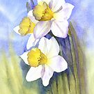 Backlit Daffies by Jacki Stokes