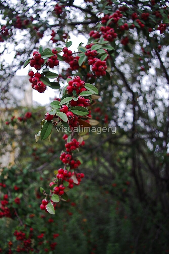 Little Red Berries by visualimagery
