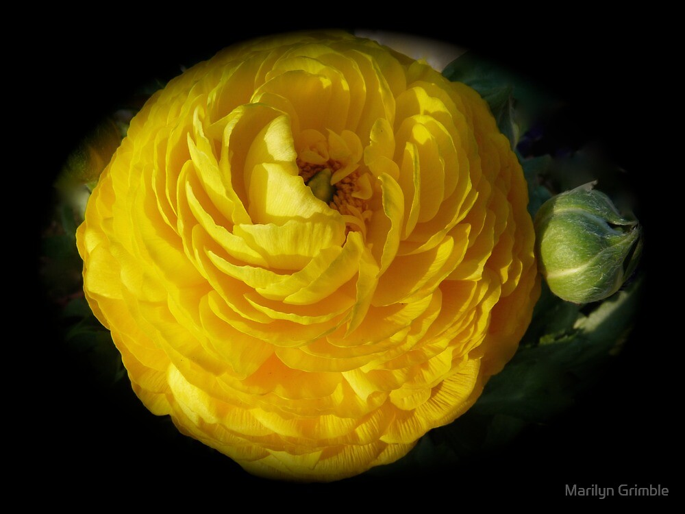 MY GARDEN BLOOMS l by Marilyn Grimble
