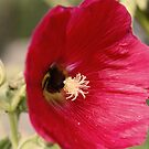 Bee Flower by WilMorris