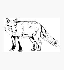 Sly Fox Black Sketchy Outline Photographic Print