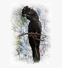 Red-tailed Black Cockatoo Photographic Print