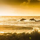 Dolphins at Wollongong City Beach by 16images