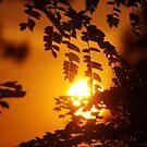 Arizona Sun by Robbi Levesque