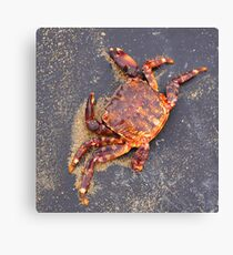 the crab Canvas Print