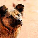 Desert Dog by Heather Haderly