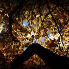 Autumns Window by Martice