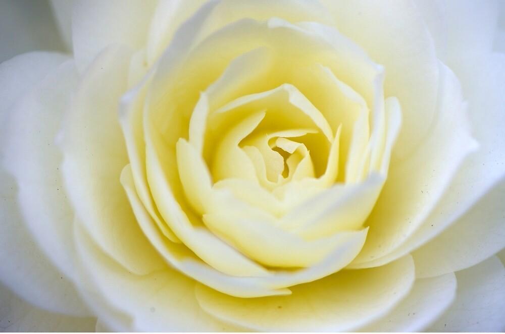 Soft cream by imperfecteye