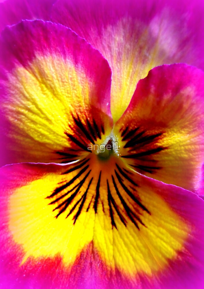 Pansy Beauty by ©The Creative  Minds