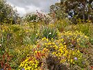 Western Australian Spring Wildflowers by DPalmer