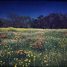 Through the Blooming Fields by Laurie Search