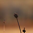 Prairie From The Past by Adam Kuehl