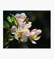 Time To Make The Honey Photographic Print