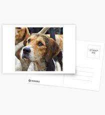 A Welsh Fox Hound Postcards