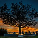 A Tree, Some Boats, and an Awesome Sunset by bazcelt