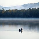 Pelican, fishing early morning in Myall Lake NSW. by Virginia McGowan