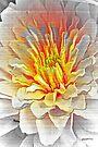 Dahlia Flower from Dark to Bright by Terri Chandler