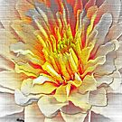 Dahlia Flower from Dark to Bright by Terri Chandler