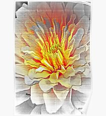 Dahlia Flower from Dark to Bright Poster