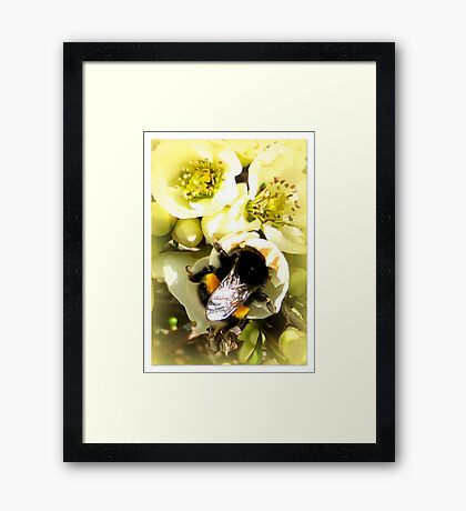 Hungry Bumble Bee Framed Print