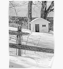 Long cold winter Poster