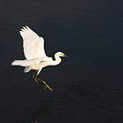 Egret by Maryna Gumenyuk